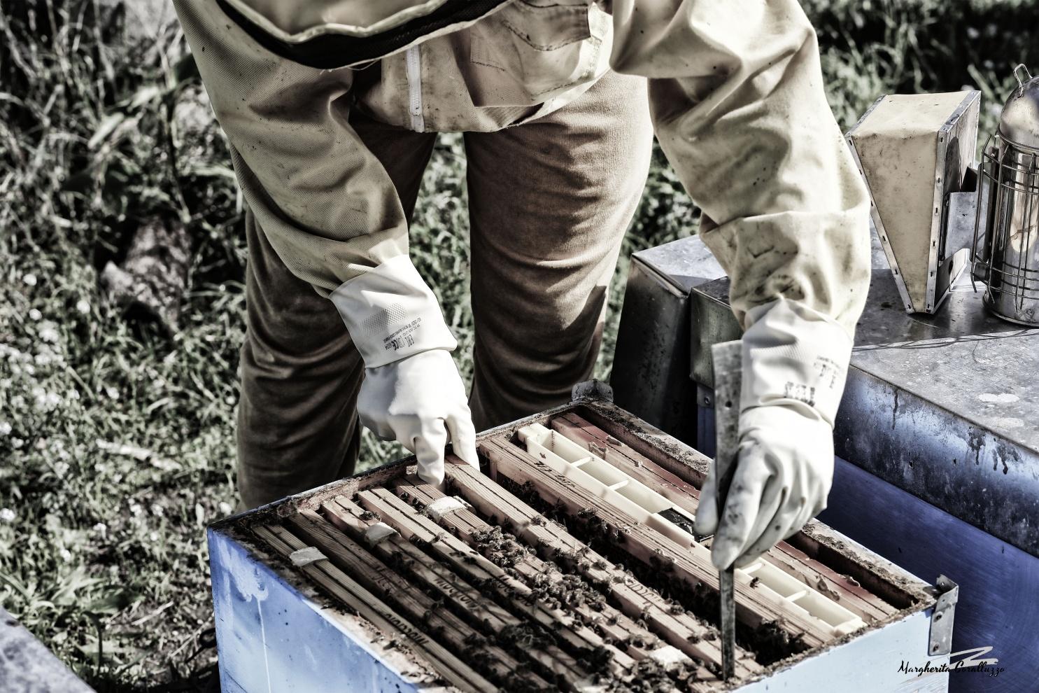 """""""L'arnia e le custodi della vita"""" - L'alveare è il rifugio artificiale dove vivere le api e può essere un contenitore di varie forme e dimensioni, costruito con i più svariati materiali e all'interno del quale le api costruiscono i favi, allevano la covata e depositano il miele."""