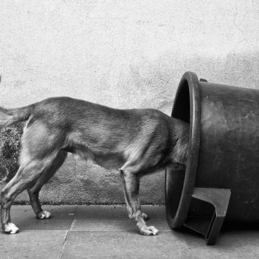 vita di un cane schiavo della vita di un uomo