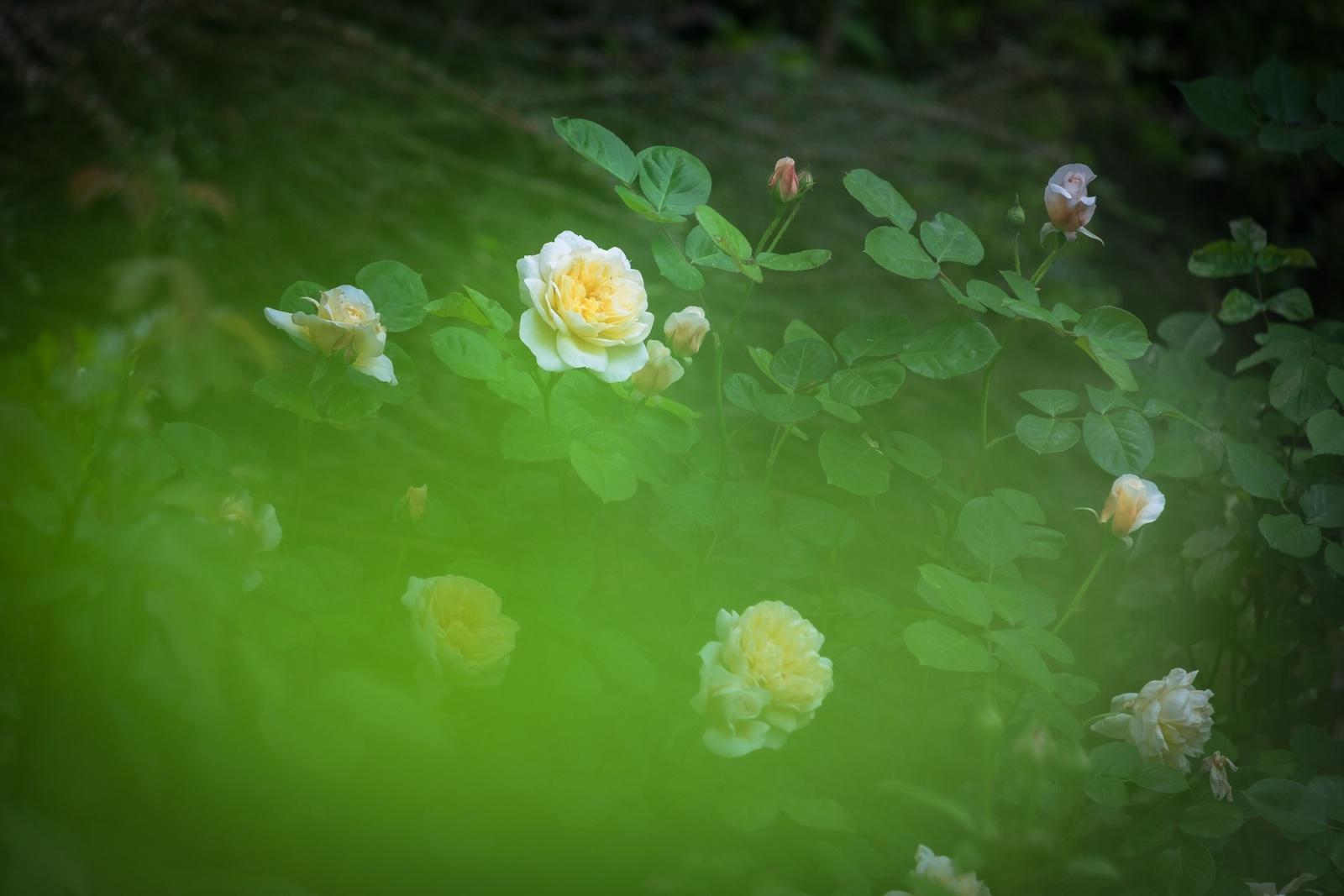 From Gabriella's garden
