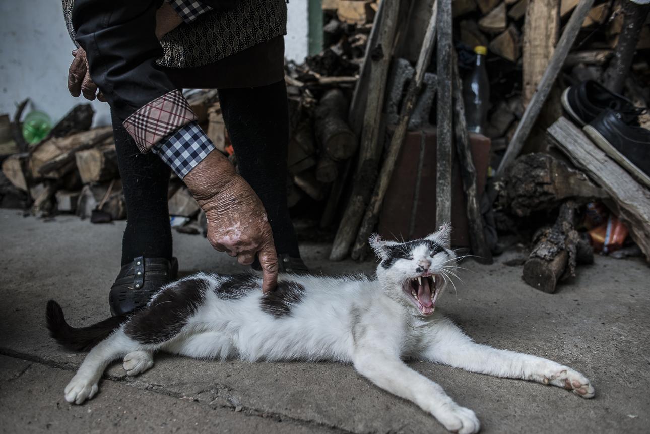 ITA  Serbia, luglio 2018 Marjia, donna magica del popolo Vlach, ha un gatto che la protegge dai serpenti, dai topi e dai ratti, che a volte entrano nella sua povera casa. Il gatto e la televisione sono la sola compagnia di questa donna, che pratica gli incantesimi della magia Vlach e vive sola, in una casa di campagna isolata e senza vicini. Il gatto è costantemente tra le sue gambe, è un buon cacciatore e l'amico di Marjia. Quando era piccino dei ratti provarono a mangiargli le orecchie.  ENG  Serbia, Luka, July 2018. Marija, a magic woman of the Vlach people, has a cat that protects her from snakes, mice and rats, that often enter her poor home. The cat and a television set are the only company of this woman.She practices the magic spells of Vlach, and lives alone, in an isolated country house with no neighbors.The cat is constantly curling around her legs; it is a good hunter and Marjia's friend. When it was a kitten, the rats tried to bite its ears.Like all womenpracticing Vlach magic, sheis particularly committed to preparing the long rite of the dead,celebrated for 7 yearssince the demise and that goesunder the nameofPomana.